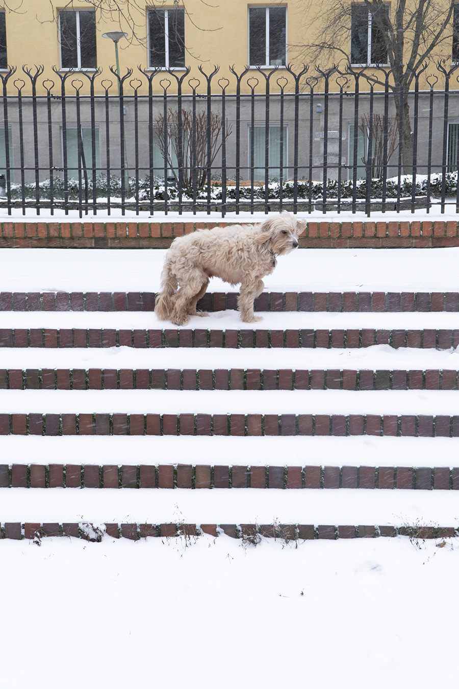 A dog stands on the snowy stairs of Klosterruine